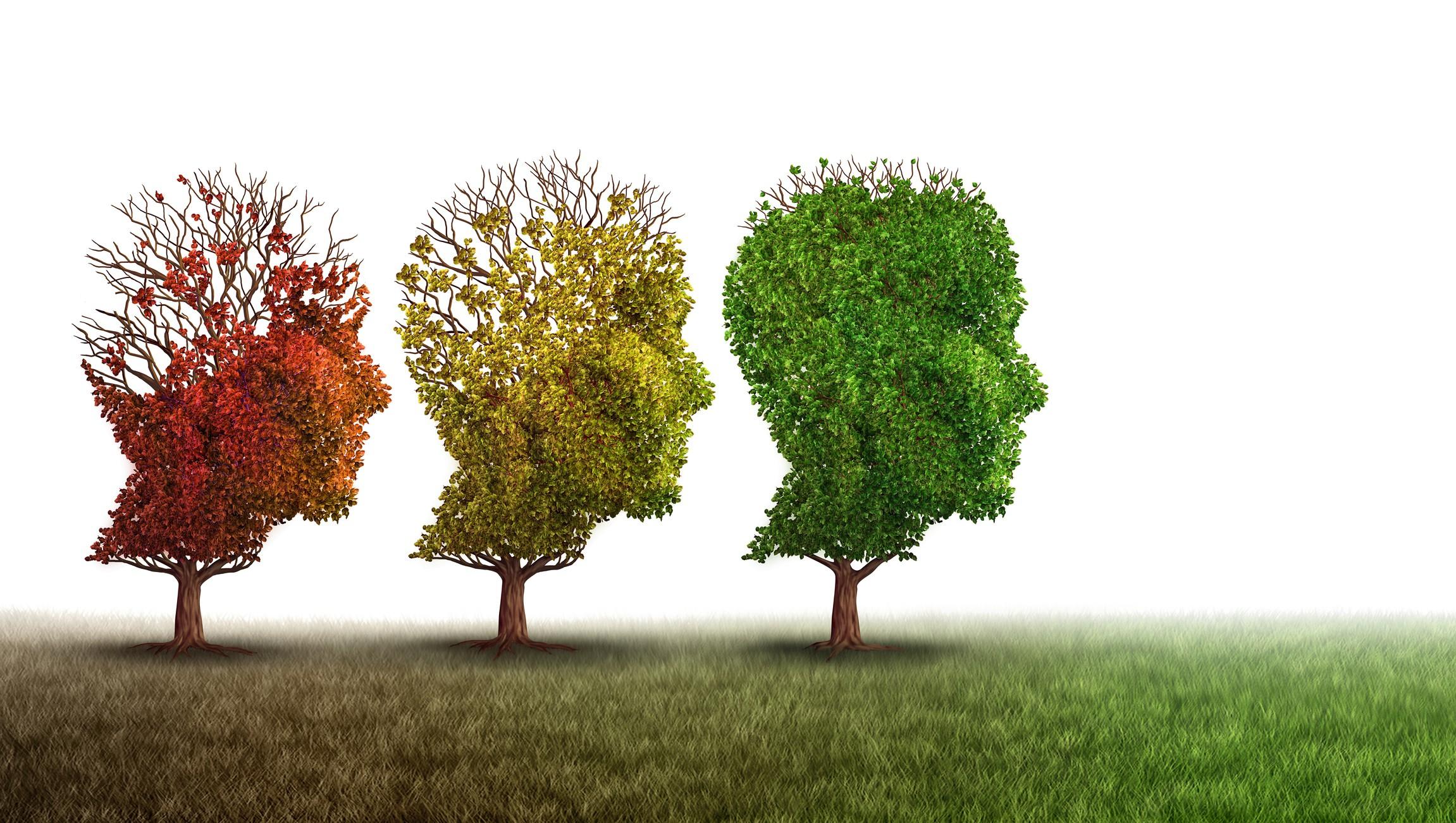 Een foto met 3 hoofden gevormd in een boom